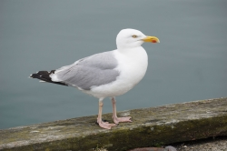 Photoshop Contest - Seagull (0 Entries)
