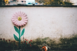Photoshop Contest - wall flower (1 Entry)